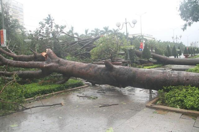 Sau bão số 5, cây cối đổ ngổn ngang, bãi biển Quy Nhơn ngập ngụa rác - Ảnh 4.