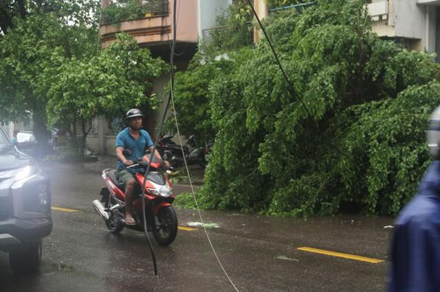 Sau bão số 5, cây cối đổ ngổn ngang, bãi biển Quy Nhơn ngập ngụa rác - Ảnh 5.
