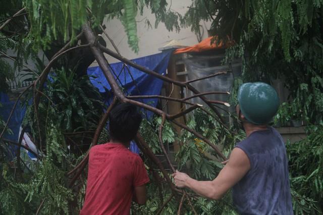 Sau bão số 5, cây cối đổ ngổn ngang, bãi biển Quy Nhơn ngập ngụa rác - Ảnh 6.