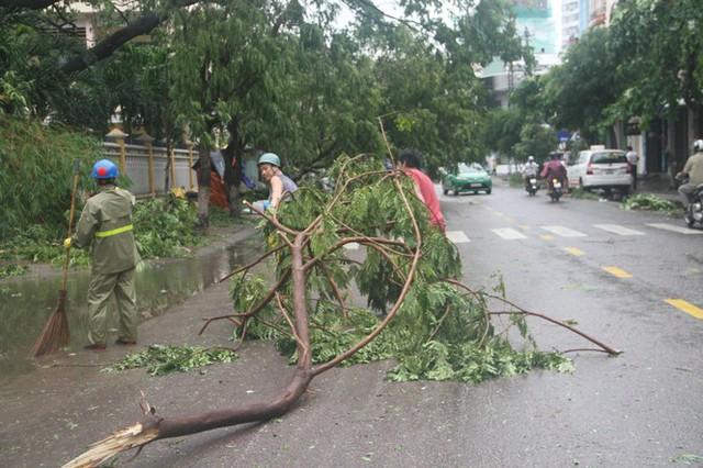 Sau bão số 5, cây cối đổ ngổn ngang, bãi biển Quy Nhơn ngập ngụa rác - Ảnh 9.