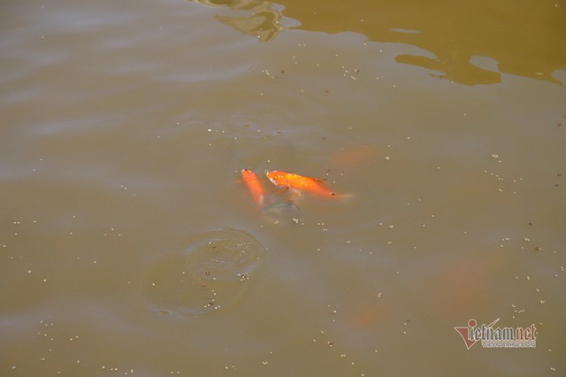 Bộ trưởng Trần Hồng Hà ra hồ Tây cho cá ăn - Ảnh 10.