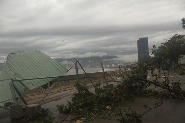 Sau bão số 5, cây cối đổ ngổn ngang, bãi biển Quy Nhơn ngập ngụa rác - Ảnh 10.