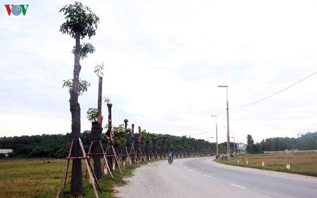 Ảnh: Hoa sữa đánh chuyển từ Hồ Tây bắt đầu tỏa hương cạnh bãi rác Nam Sơn - ảnh 11