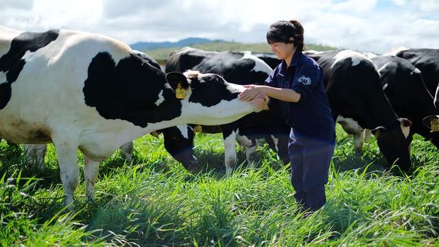 Bloomberg: Thị trường sữa Trung Quốc tăng trưởng là cơ hội cho Việt Nam - Ảnh 1.