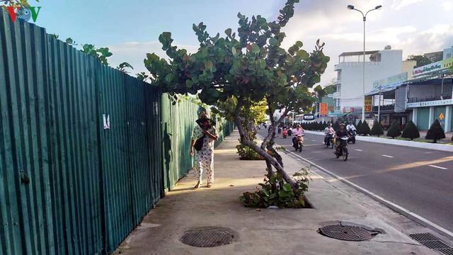 Dự án lấn biển bỏ hoang gây ô nhiễm môi trường giữa thành phố Nha Trang - Ảnh 1.