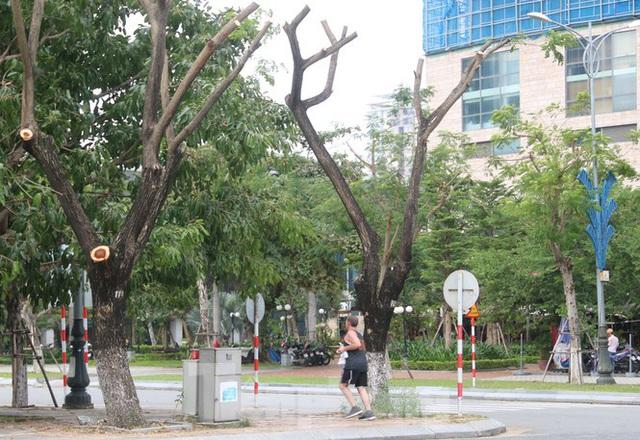 Hàng trăm cây xanh ở Đà Nẵng bất ngờ bị cắt trụi cành - Ảnh 2.