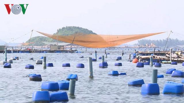 Tôm hùm Phú Yên rớt giá khiến người nuôi gặp khó khăn - Ảnh 1.