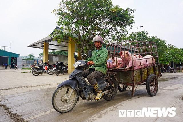 Giá lợn hơi lập đỉnh 78.000 đồng/kg, giá bán lẻ đắt kỷ lục 150.000 đồng/kg - Ảnh 3.