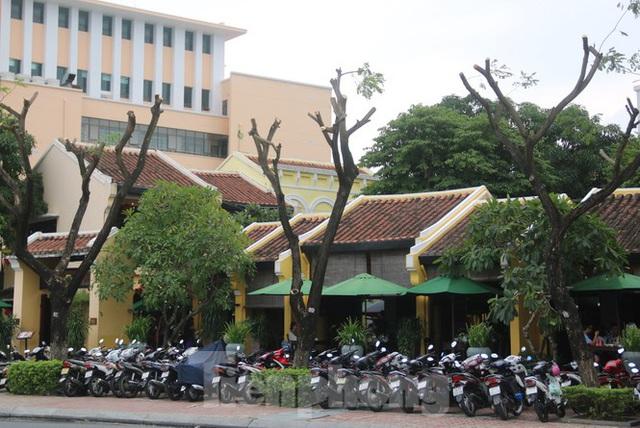 Hàng trăm cây xanh ở Đà Nẵng bất ngờ bị cắt trụi cành - Ảnh 3.
