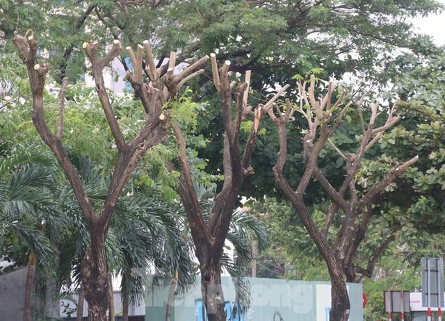 Hàng trăm cây xanh ở Đà Nẵng bất ngờ bị cắt trụi cành - Ảnh 4.