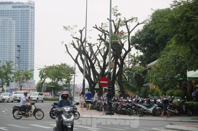 Hàng trăm cây xanh ở Đà Nẵng bất ngờ bị cắt trụi cành - Ảnh 9.
