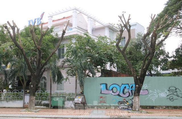 Hàng trăm cây xanh ở Đà Nẵng bất ngờ bị cắt trụi cành - Ảnh 10.