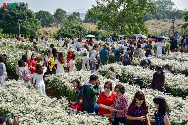 Cúc hoạ mi hút khách đến vườn hoa Nhật Tân  - Ảnh 1.