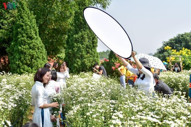 Cúc hoạ mi hút khách đến vườn hoa Nhật Tân  - Ảnh 3.
