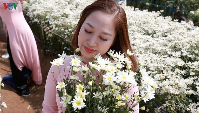 Cúc hoạ mi hút khách đến vườn hoa Nhật Tân  - Ảnh 6.