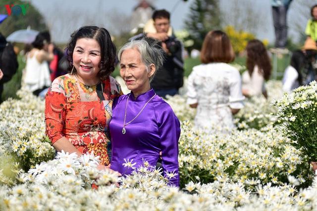 Cúc hoạ mi hút khách đến vườn hoa Nhật Tân  - Ảnh 7.