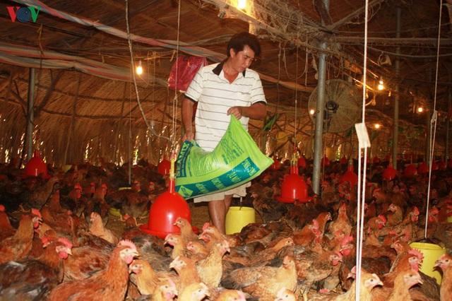 Sợ bệnh dịch càn quét heo, nông dân thử vận may với gia cầm - Ảnh 2.