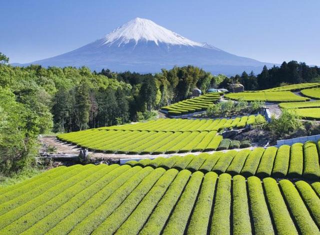 Câu chuyện đằng sau những trái dưa tiền tỉ của Nhật Bản: Căn nguyên từ tình yêu bất diệt của người trồng cây - Ảnh 12.