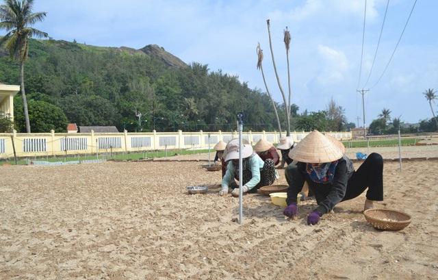 Nguy cơ thiếu nước vụ tỏi đông xuân ở huyện đảo Lý Sơn - Ảnh 1.