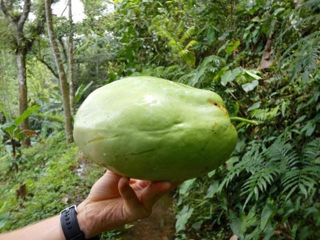 Câu chuyện ngỡ như cổ tích của gia đình sống 20 năm trong rừng nhờ trồng rau quả sạch - Ảnh 17.