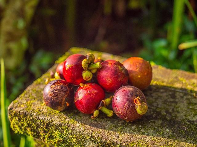 Câu chuyện ngỡ như cổ tích của gia đình sống 20 năm trong rừng nhờ trồng rau quả sạch - Ảnh 19.