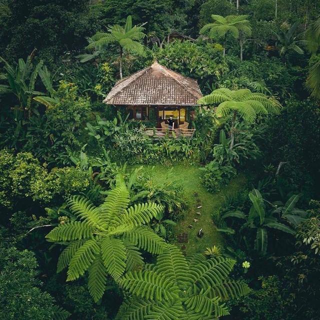 Câu chuyện ngỡ như cổ tích của gia đình sống 20 năm trong rừng nhờ trồng rau quả sạch - Ảnh 7.