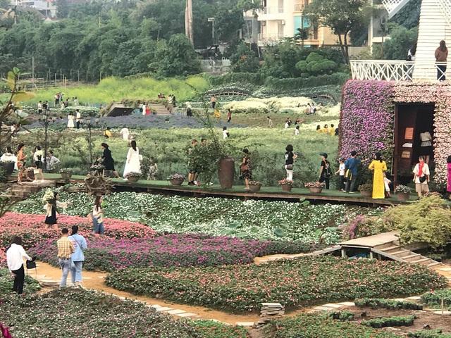 Cúc họa mi vào mùa, nhà vườn kiếm hàng chục triệu mỗi ngày - Ảnh 6.