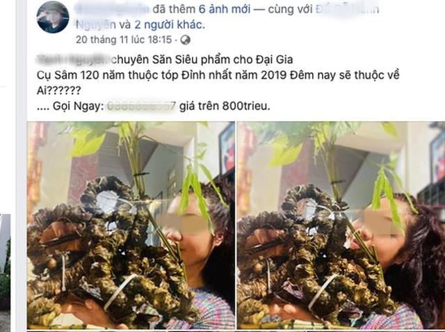 Quốc bảo Sâm Ngọc Linh thành hàng chợ, bán đầy trên mạng xã hội - Ảnh 2.