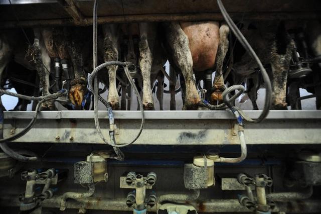 Khi sữa chay ngày càng được ưa chuộng: Quả bom nổ chậm cho ngành sữa truyền thống? - Ảnh 8.