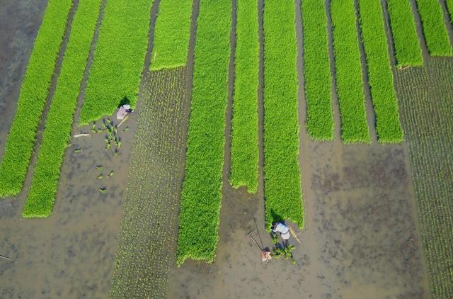 Khủng hoảng lương thực đang gõ cửa, châu Á không thể tự cung cấp đủ lương thực cho khu vực và cần thêm 800 tỷ USD đầu tư trong 10 năm tới - Ảnh 1.