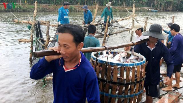 Ấn Độ có thể cạnh tranh với Việt Nam về xuất khẩu cá tra  - Ảnh 1.