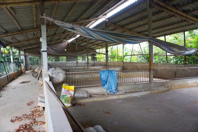 Tan hoang thủ phủ nuôi lợn miền Bắc sau dịch tả châu Phi - Ảnh 3.