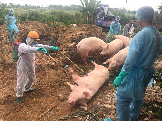 Bộ trưởng Nông nghiệp Nguyễn Xuân Cường: Chi 2.370 tỷ đồng hỗ trợ nông dân bị thiệt hại bởi dịch bệnh tồi tệ nhất lịch sử - Ảnh 2.