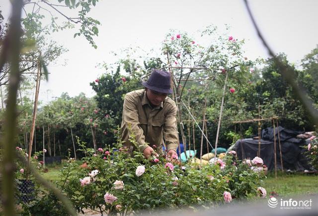 Chàng thanh niên 30 tuổi trồng trại hoa hồng thu hàng trăm triệu mỗi năm - Ảnh 2.