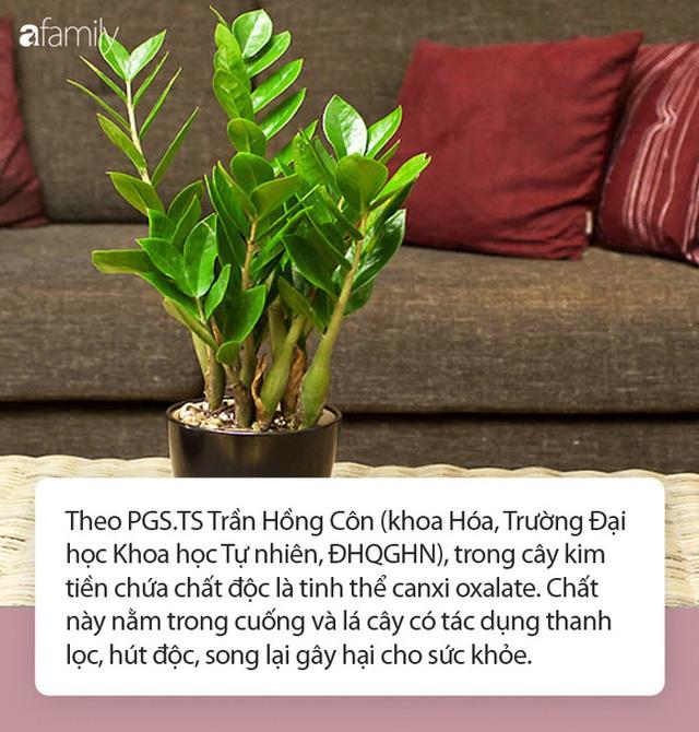 Bé 15 tháng tuổi nguy kịch sau khi cho lá kim tiền vào miệng, chuyên gia cảnh báo gia đình nào trồng cây phải cực chú ý! - Ảnh 3.