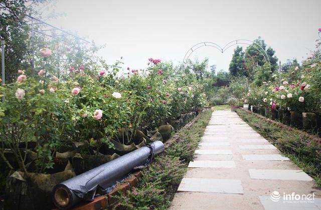 Chàng thanh niên 30 tuổi trồng trại hoa hồng thu hàng trăm triệu mỗi năm - Ảnh 3.