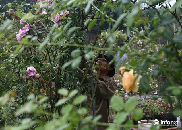 Chàng thanh niên 30 tuổi trồng trại hoa hồng thu hàng trăm triệu mỗi năm - Ảnh 5.