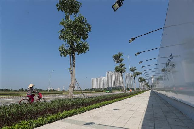 Cận cảnh hàng cây hoa sữa đang độ nở trên con đường mới mở của Thủ đô - Ảnh 6.