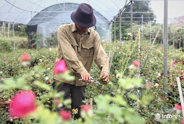 Chàng thanh niên 30 tuổi trồng trại hoa hồng thu hàng trăm triệu mỗi năm - Ảnh 6.