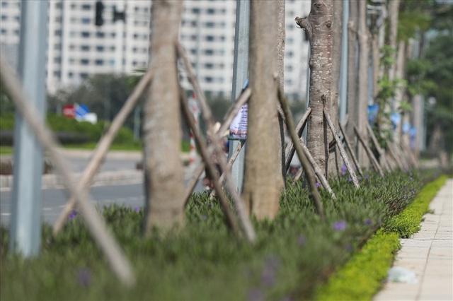 Cận cảnh hàng cây hoa sữa đang độ nở trên con đường mới mở của Thủ đô - Ảnh 9.