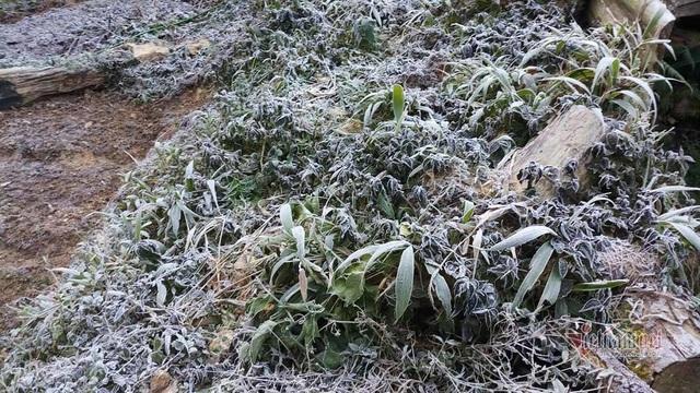 Cây cối phủ 1 màu trắng hóa đá nơi vùng biên giới Nghệ An - Ảnh 7.