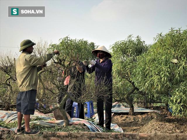 Vặt lá đào thuê, kiếm hơn chục triệu mỗi tháng - Ảnh 9.