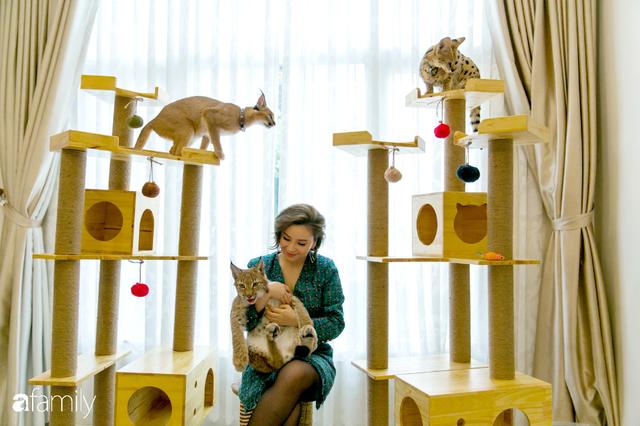 Trang Hà - Cô gái mang những chú mèo trị giá hàng tỷ đồng về Việt Nam và tiết lộ trào lưu nuôi thú cưng mới của giới đại gia và siêu giàu tại Sài Gòn - Ảnh 24.