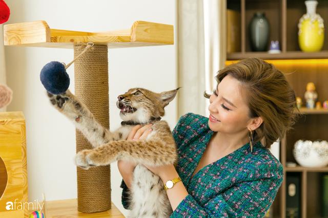 Trang Hà - Cô gái mang những chú mèo trị giá hàng tỷ đồng về Việt Nam và tiết lộ trào lưu nuôi thú cưng mới của giới đại gia và siêu giàu tại Sài Gòn - Ảnh 27.