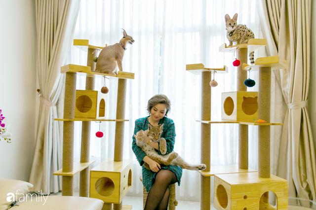 Trang Hà - Cô gái mang những chú mèo trị giá hàng tỷ đồng về Việt Nam và tiết lộ trào lưu nuôi thú cưng mới của giới đại gia và siêu giàu tại Sài Gòn - Ảnh 4.