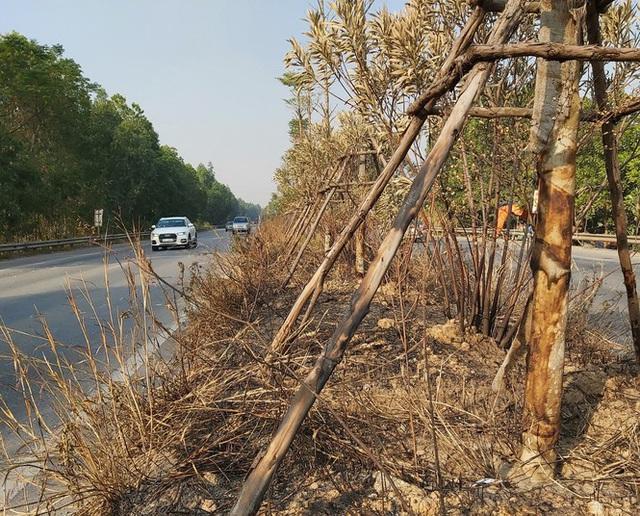 Nhiều cây xanh trên Quốc lộ 18 bất ngờ bị đốt cháy rụi - Ảnh 6.