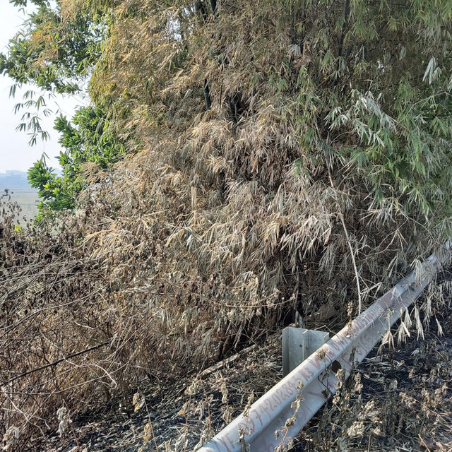 Nhiều cây xanh trên Quốc lộ 18 bất ngờ bị đốt cháy rụi - Ảnh 7.