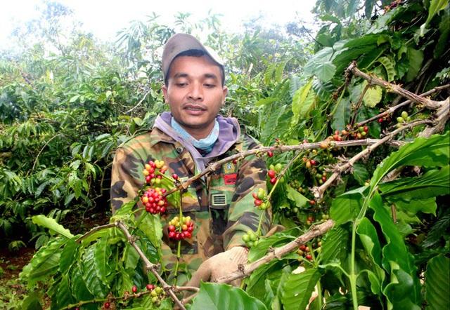Cà phê chín rộ, nông dân Tây Nguyên hối hả thu hoạch - Ảnh 3.