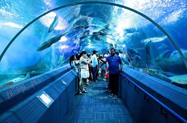 Đến Pattaya mà chỉ biết có tắm biển thôi thì phải bổ sung gấp thực đơn du lịch của bạn bằng 10 trải nghiệm thú vị sau - Ảnh 24.