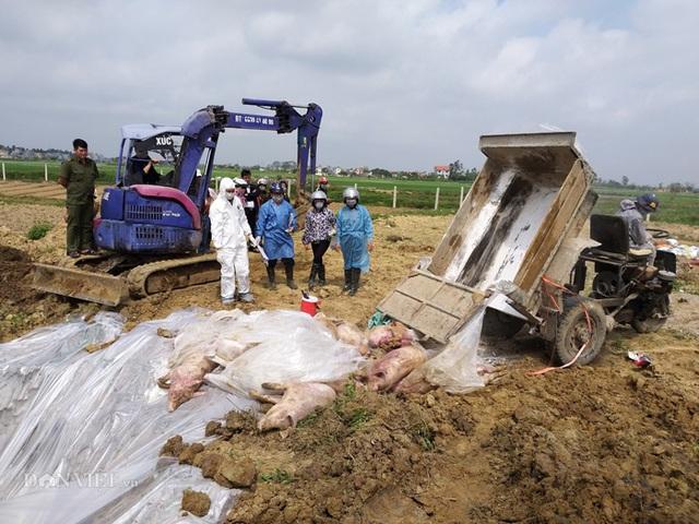 Tốn hơn 5.000 tỷ chống dịch, 6 triệu con lợn bị tiêu hủy - Ảnh 1.